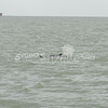 (124) Galveston Island Ferry Ride - Dolphins