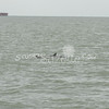 (125) Galveston Island Ferry Ride - Dolphins