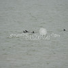(168) Galveston Island Ferry Ride - Dolphins