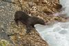 New Zealand fur seals at Admirals arch