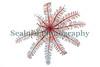 feather star Antedon bifida Clive Brown crab pot 240114 ©RLLord 8429 smg