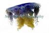 Cyanea lamarckii Belle Greve Bay 110510 ©RLLord 9196 smg