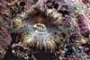 Cereus pendunculatus BG 28-910 smg