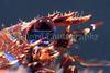Galathea strigosa BG head cu 180407 35-903 smg