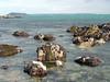 Inter tidal seaweed covered rocks in Belle Greve Bay, Guernsey