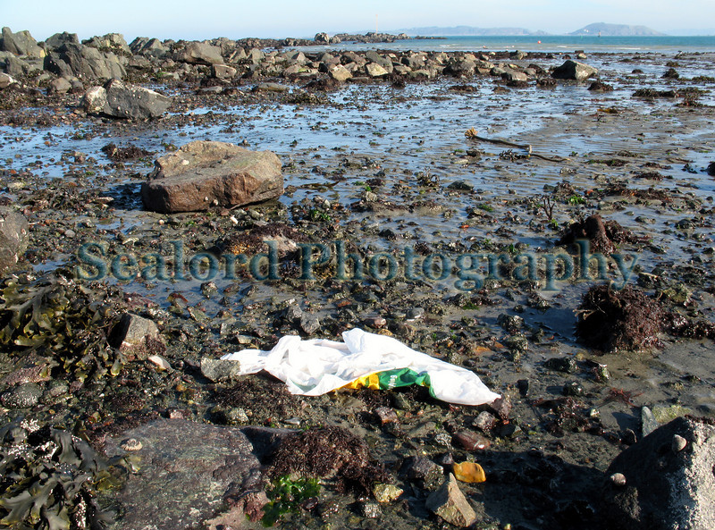 "This is the mid-shore area of the southern end of Belle Greve Bay near the Salerie quay looking out towards the Quaine pole in the distance which is reachable by foot during an extremely low tide.  <br /> <br /> I found this Guernsey Safeway plastic carrier bag lying on the beach and took an image of it before picking it up.  Guernsey retail food shoppers used about 10 million plastic carrier bags per year before a £0.05 charge was introduced in 2008.  Stopping the free distribution of plastic carrier bags at Guernsey retail food shops has significantly reduced the number being distributed.  However a few plastic carrier bags still end up in the environment.  Because of their light weight, some plastic carrier bags are blown onto the shore where they may be carried out to sea to be ingested by cetaceans, marine birds or turtles.  See  <a href=""http://pagesperso-orange.fr/gecc/publications/pdf/PosterSeattle2002.pdf"">http://pagesperso-orange.fr/gecc/publications/pdf/PosterSeattle2002.pdf</a><br /> <br /> Those that don't get ingested can degrade to invisible microscopic particles which then begin their journey through the food chain back to humans. <br /> <br /> Disposable plastic carrier bags represent such a wasteful use of oil.  They provide a short term convenience and a long-term environmental hazard.<br /> <br /> Please bring a shopping bag with you when you shop.  There are plenty of ways of remembering to bring a shopping bag with you.  I have one attached to my belt loop so I never forget it.  See  <a href=""http://www.sealordphotography.net/gallery/3338107_734Um#206829342"">http://www.sealordphotography.net/gallery/3338107_734Um#206829342</a><br /> <br /> File No. 090208 2954<br /> ©RLLord<br /> fishinfo@guernsey.net"