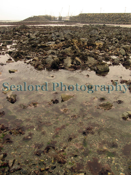 """This shallow pool in the foreground with its scattered coralline algae covered boulders and cobbles is where I found the first Guernsey record for the nudibranch, Janolus hyalinus, on the 17 February 2007.  See  <a href=""""http://sealord.smugmug.com/gallery/1984411#131994356"""">http://sealord.smugmug.com/gallery/1984411#131994356</a> <br /> The entrance to the Queen Elizabeth II marina and the cranes of St. Peter Port harbour are in the background.<br /> <br /> File No. BG 190207 6514<br /> ©RLLord<br /> fishinfo@guernsey.net"""