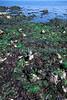 Cobble field La Valette 14-488 smg