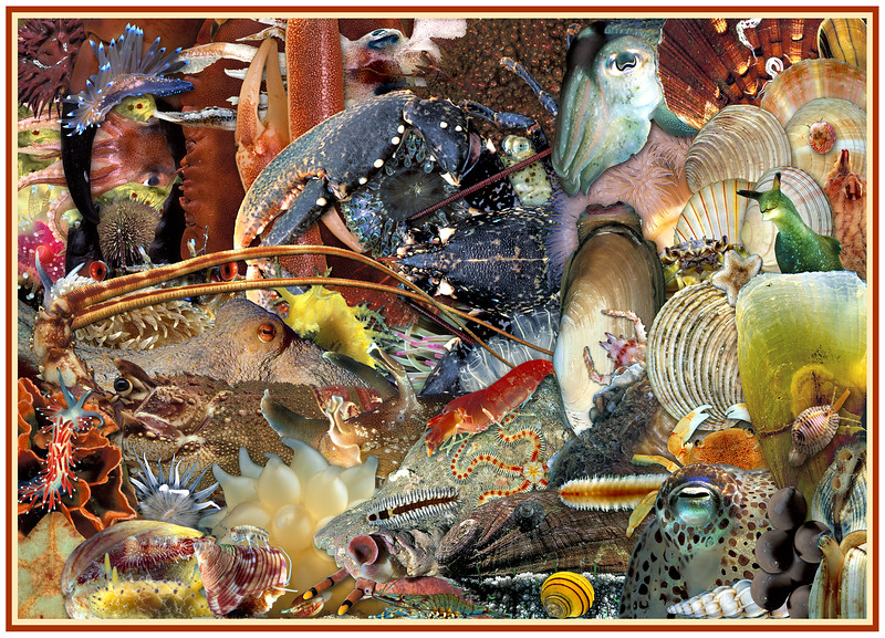 A montage of marine invertebrates from Guernsey waters.