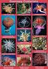 Guernsey cnidaria poster smg