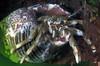 hermit crab Cullercoats 180307 13-888 smg