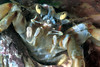 Hermit crab Cullercoats 180307 16-888 smg