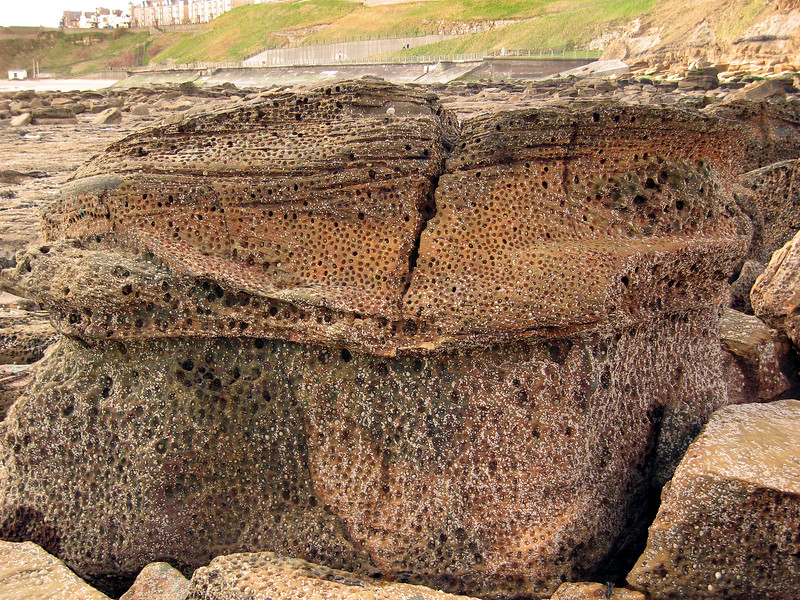 Tynemouth Sharpness Point  limpet holes 190307 7297 smg