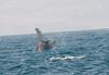 humpback on its side