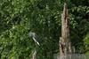 082207 Mark Twain National Wildlife Refuge  036
