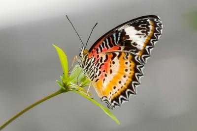 Maryland Brookside Garden Butterflies