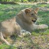 Luke the Lion 2