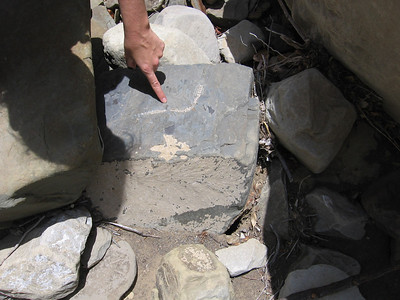 Matilija 05-19-2007