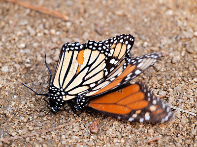 PB095814 mating