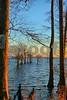 P1330518 Cypress Trees w Tripod vt