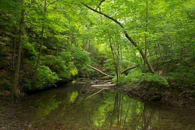Woodland scene, Upper Dells, Matthiessen State Park, Illinois.