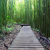 04-22 Bamboo Forest on Pipiwai Trail in Haleakala Nat'l Park @ Maui, Hawaii