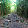 04-21 Bamboo Forest on Pipiwai Trail in Haleakala Nat'l Park @ Maui, Hawaii