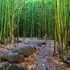 04-23 Bamboo Forest on Pipiwai Trail in Haleakala Nat'l Park @ Maui, Hawaii