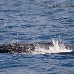 Humpback Whale - taken near Maui.
