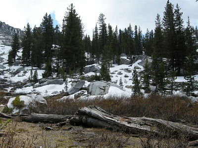Looking south up the Mosquito Lakes drainage, from the vicinity of the small pond at about 9800 feet shown on the 7.5 quad. Everything was very soggy.