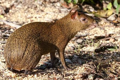 Riviera Maya Mammals, Reptiles and Insects