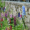 lupines - part of the Cutting gardens