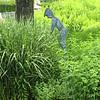 in the gardens near fairway
