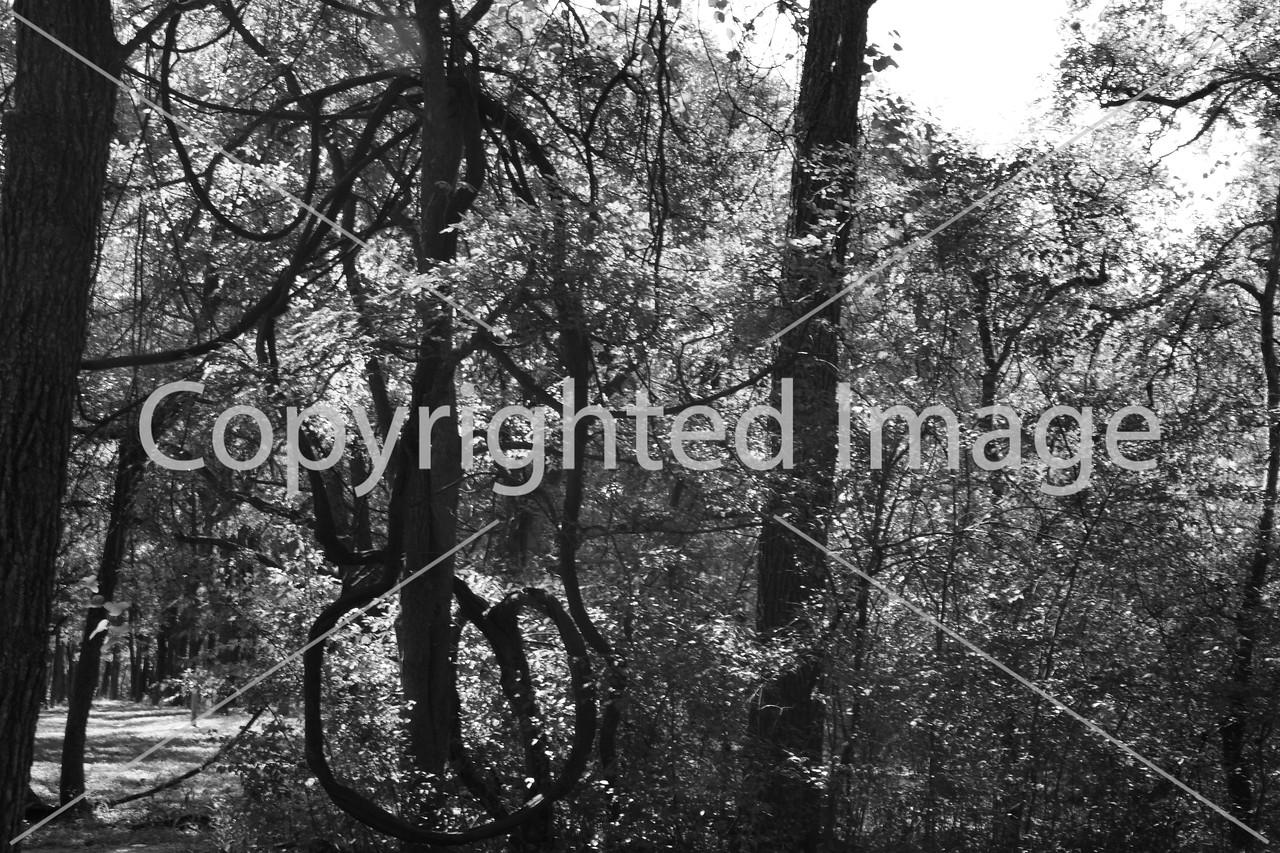 McKinney Falls 0227