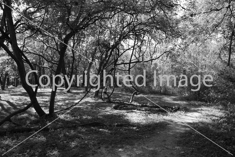 McKinney Falls 0229