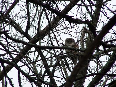 Meadow Preserve - Birds and Mammals
