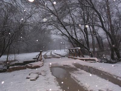 Meadow Preserve - Snow