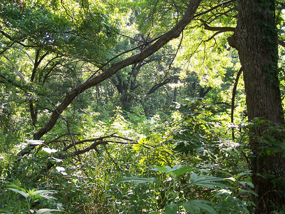 Meadow Preserve - Trees and Landscapes