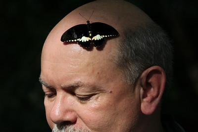 Meijer Butterflies 09