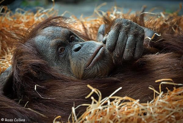 Melbourne Zoo 2016
