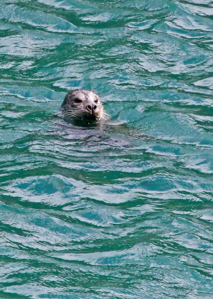 Seal8716