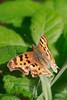 Butterfly8747
