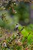 Hummingbird8786