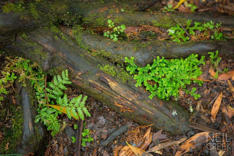 creek-141207-022.jpg