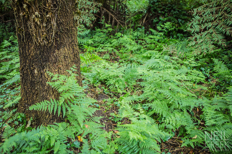 creek-141207-013.jpg