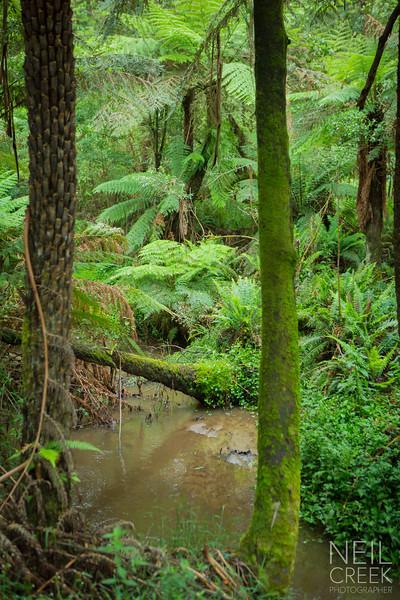 creek-141207-026.jpg