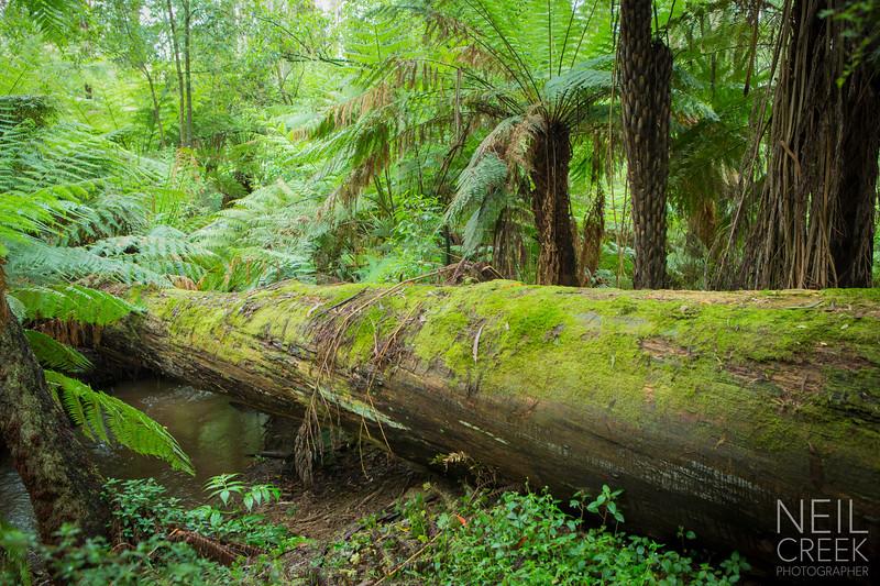 creek-141207-009.jpg