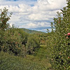 Scenes from around Mercier Orchards in Blue Ridge, GA.