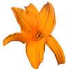 meridian-gardens-lilies-51