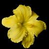 meridian-gardens-lilies-32